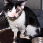 Plants and Animals: Bart the Zombie Cat!  Buried Alive on Purpose?  The Real Story!