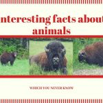 Interesting Facts: Top 15 Interesting Facts About Animals