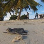 Enviroment: Island solutions: Sustainable tourism for secure livelihoods
