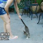 Plants and Animals: Hemingway Cats – Did They Survive Hurricane Irma?